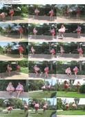 Mastasia_HollyStefani01_Badminton.wmv.jpg