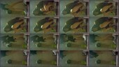 bre0vxbp6d2i - v78 - 55 videos