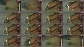 di1mm1t8eam0 - v78 - 55 videos