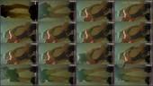 eub6rvk05unt - v78 - 55 videos