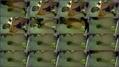 fy9pgnc7zzpu - v78 - 55 videos