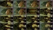 glkev9n42ss6 - v78 - 55 videos