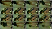 lopjewrf2g0a - v78 - 55 videos