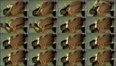 ndczfye0f8p3 - v78 - 55 videos