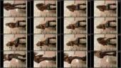 z62vo02awupd - v81 - 60 videos